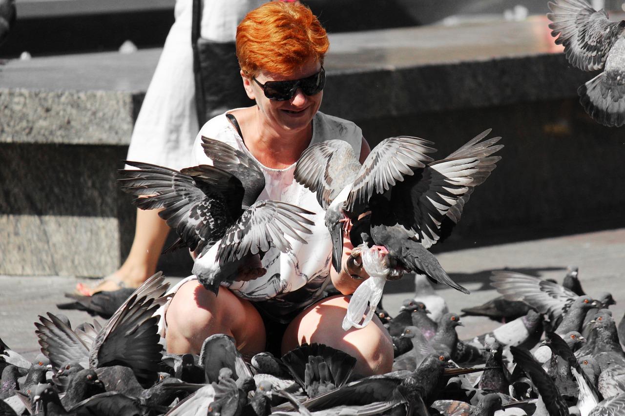 pigeons-1036863_1280