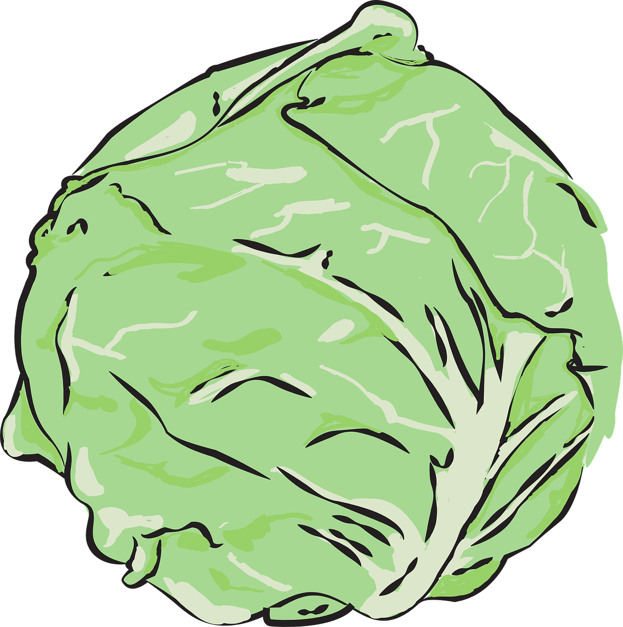 cabbage-559887_1280