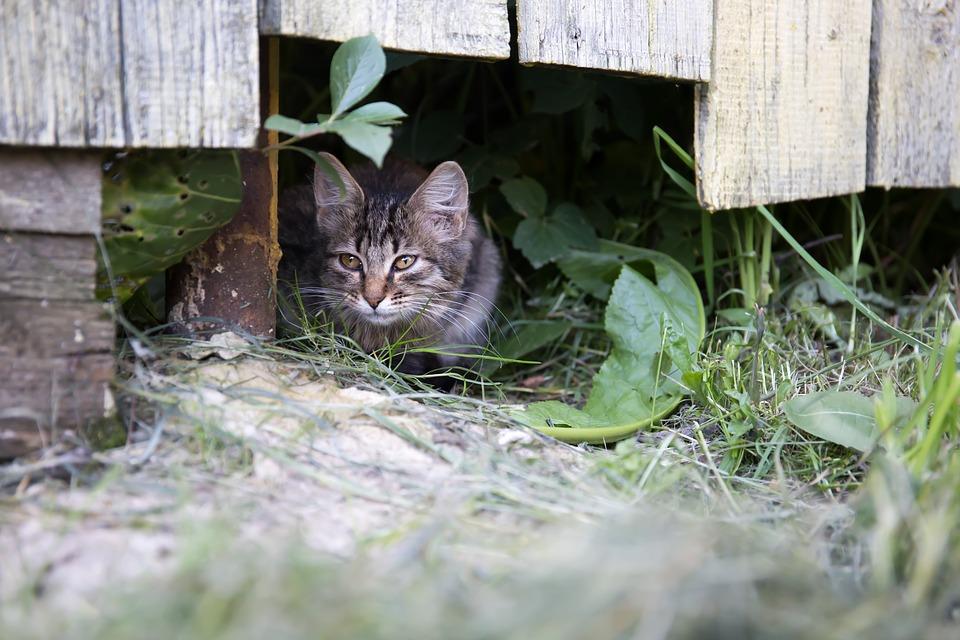 cat-2557878_960_720