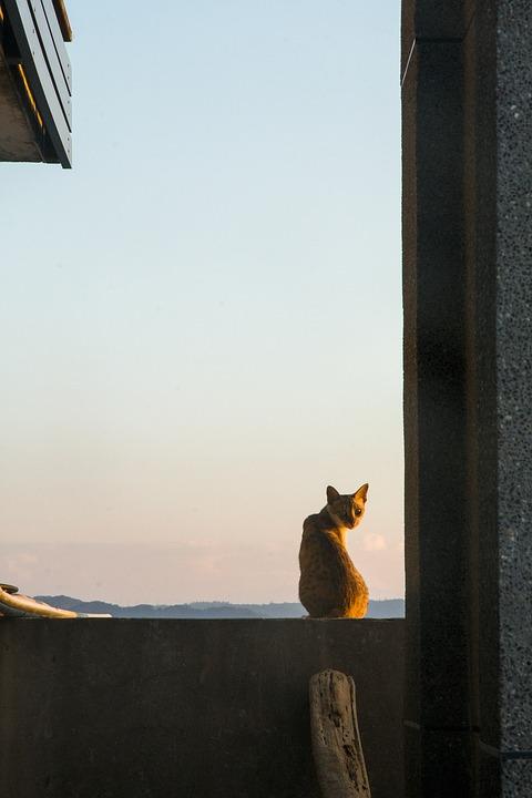 cat-3383378_960_720