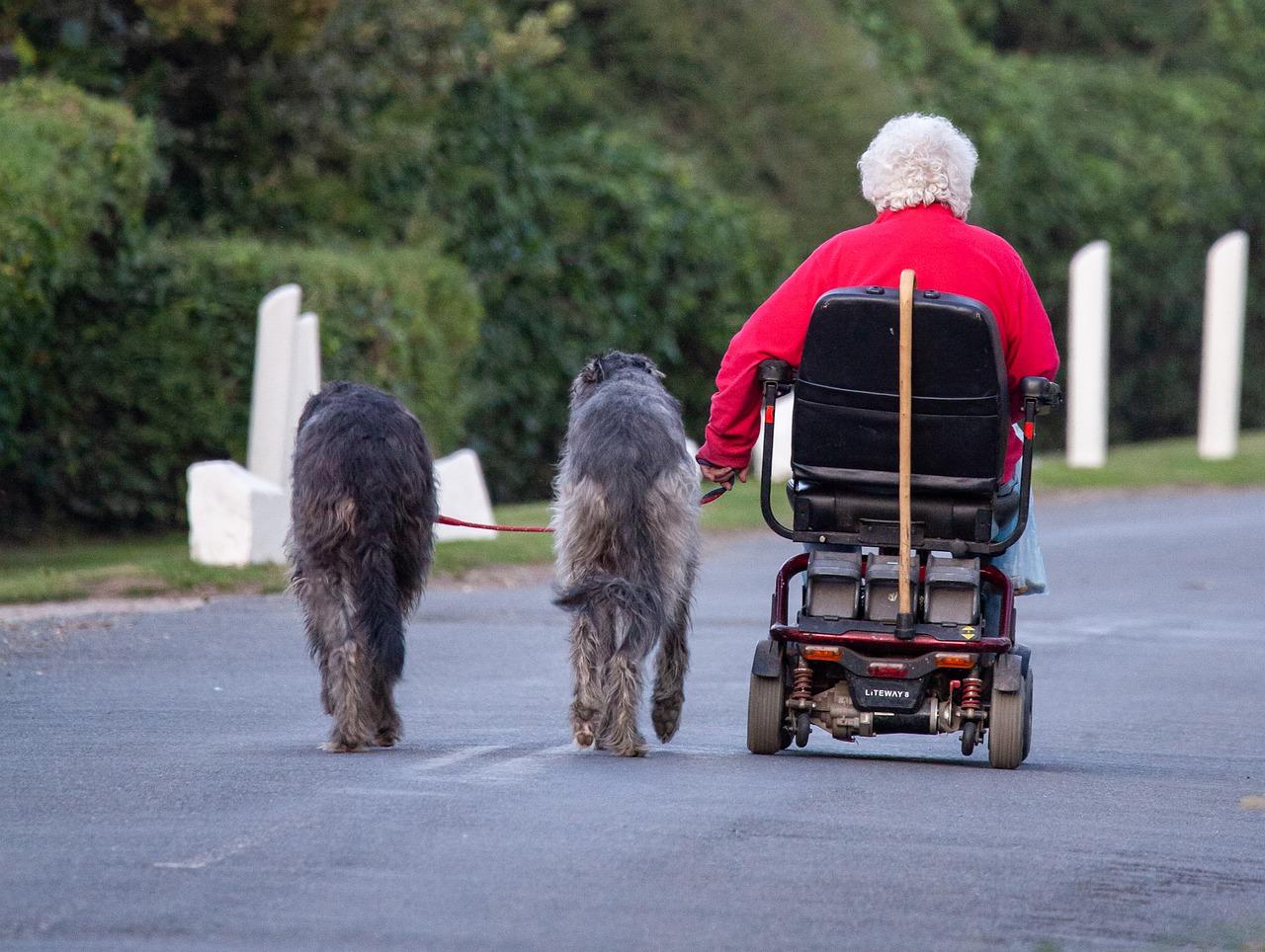 dog-walking-4426782_1280