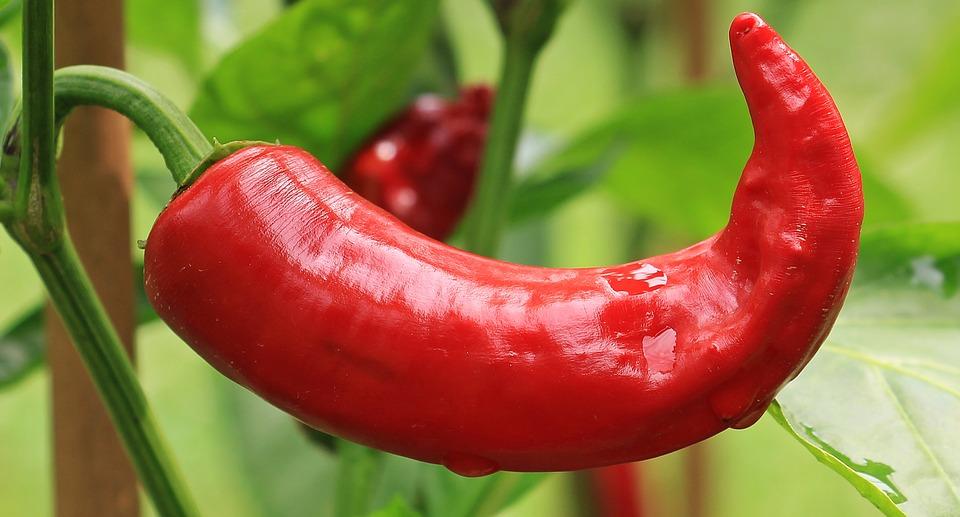 pepperoni-1539472_960_720