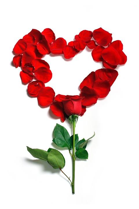 rose-1215314_960_720