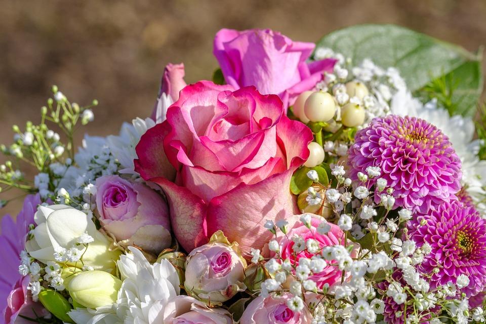rose-3363810_960_720