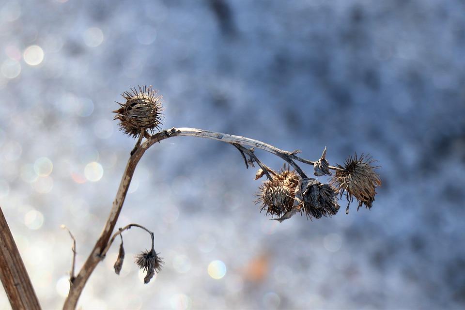 winter-4096529_960_720