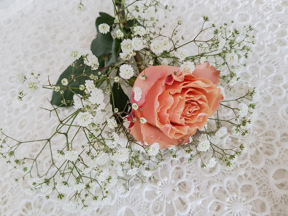 rose-orange-3227908_960_720