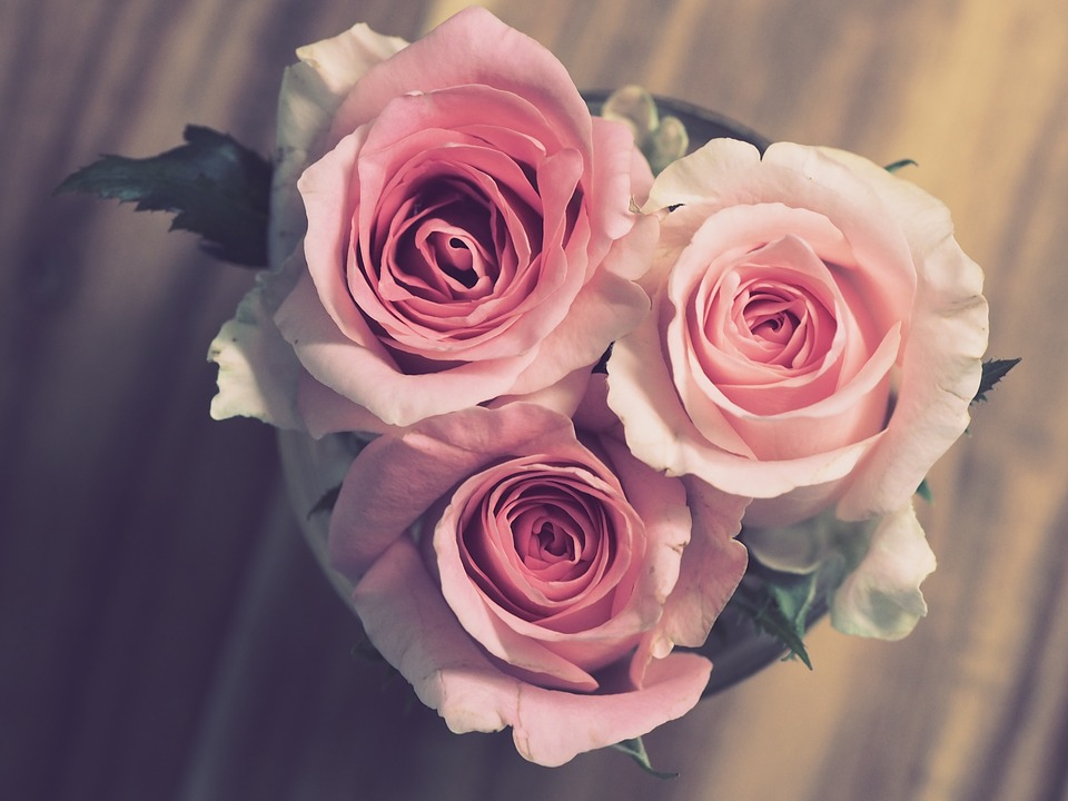 roses-3072698_960_720