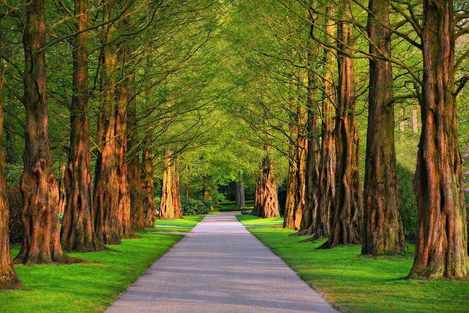 pathway-3596034_960_720
